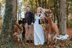 Spaziergang mit Alpaka auf der Hochzeit