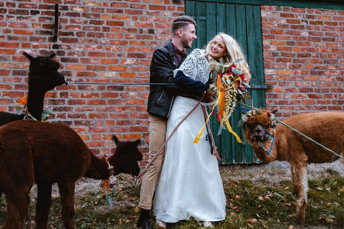 Wedding Circus mit Alpaka vor Scheune