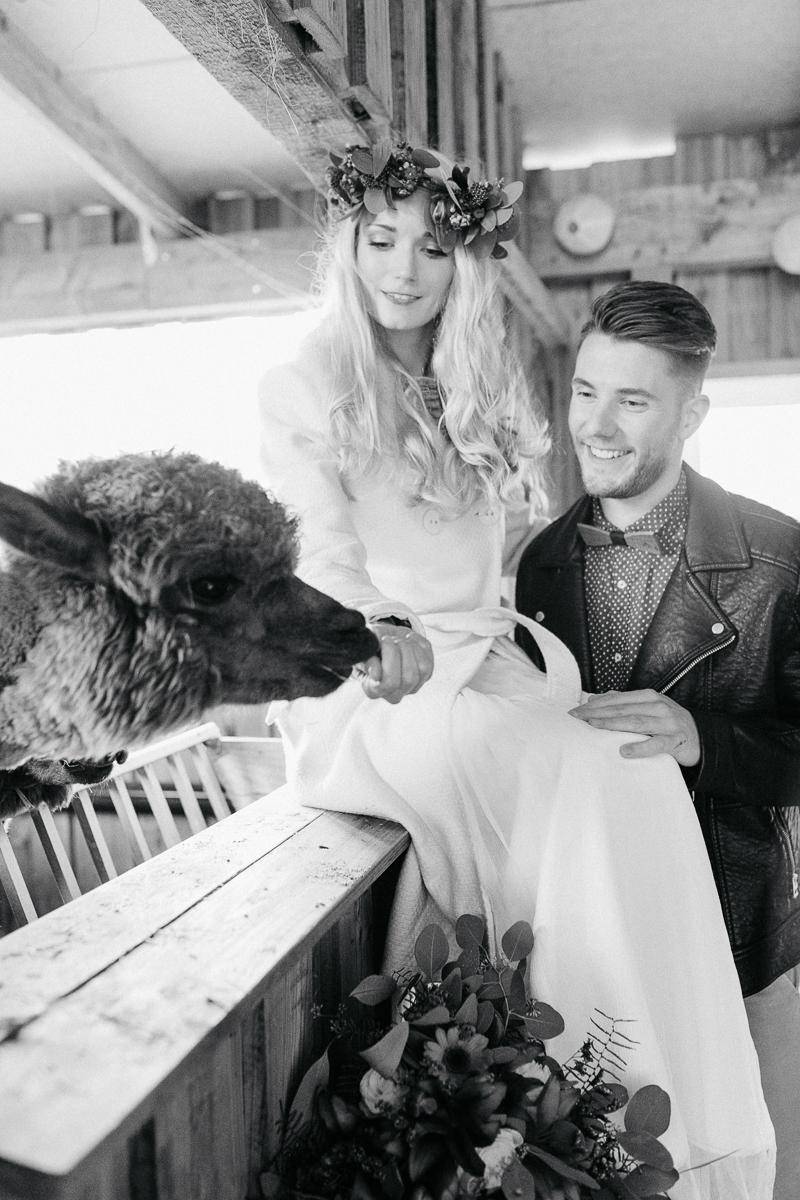 Bohoh Brautpaar mit Alpaka Lama