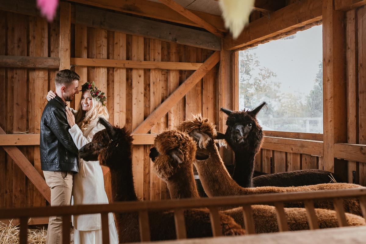 Boho Hochzeit mit Alpaka Lama